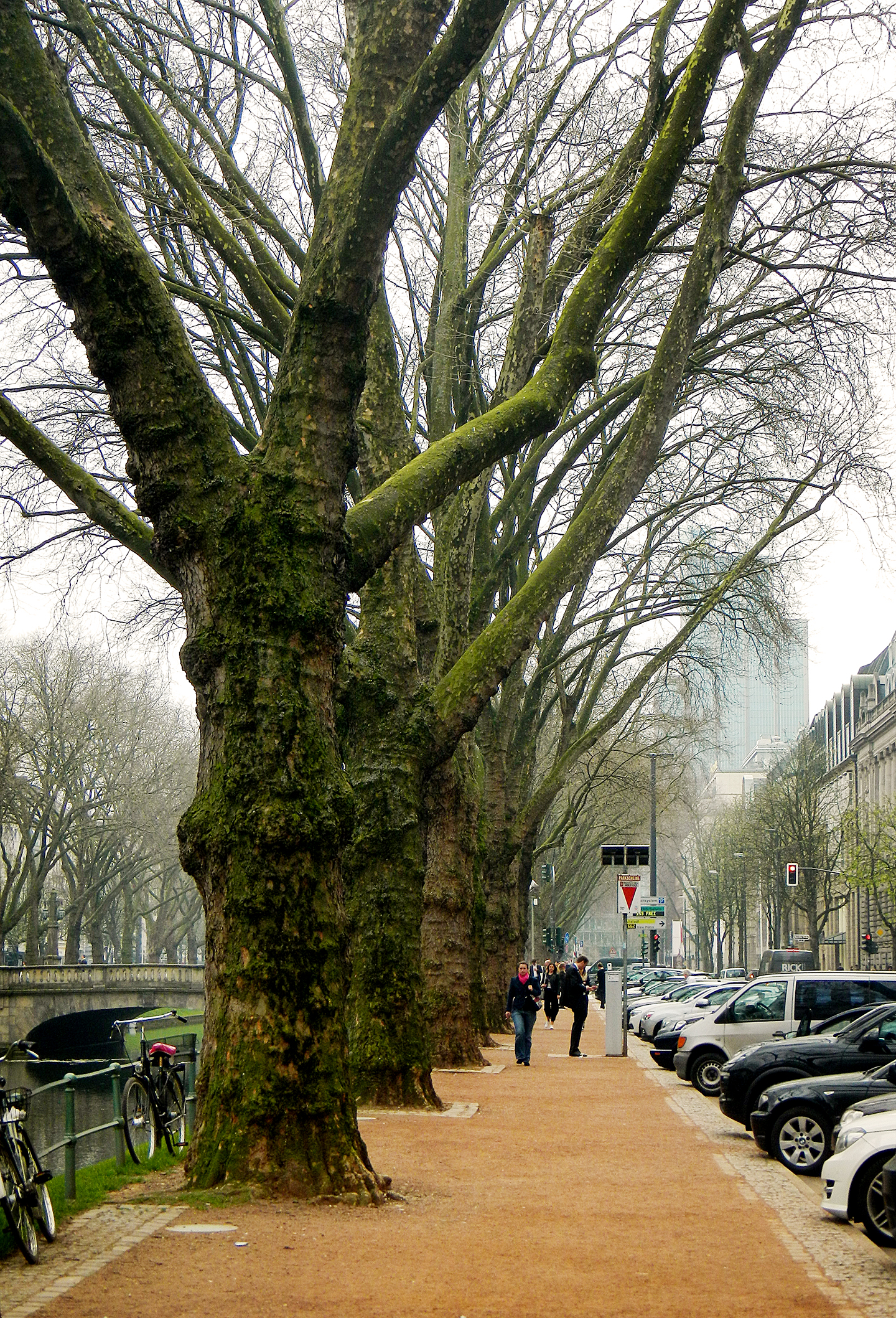 Baumen an der Konigsallee