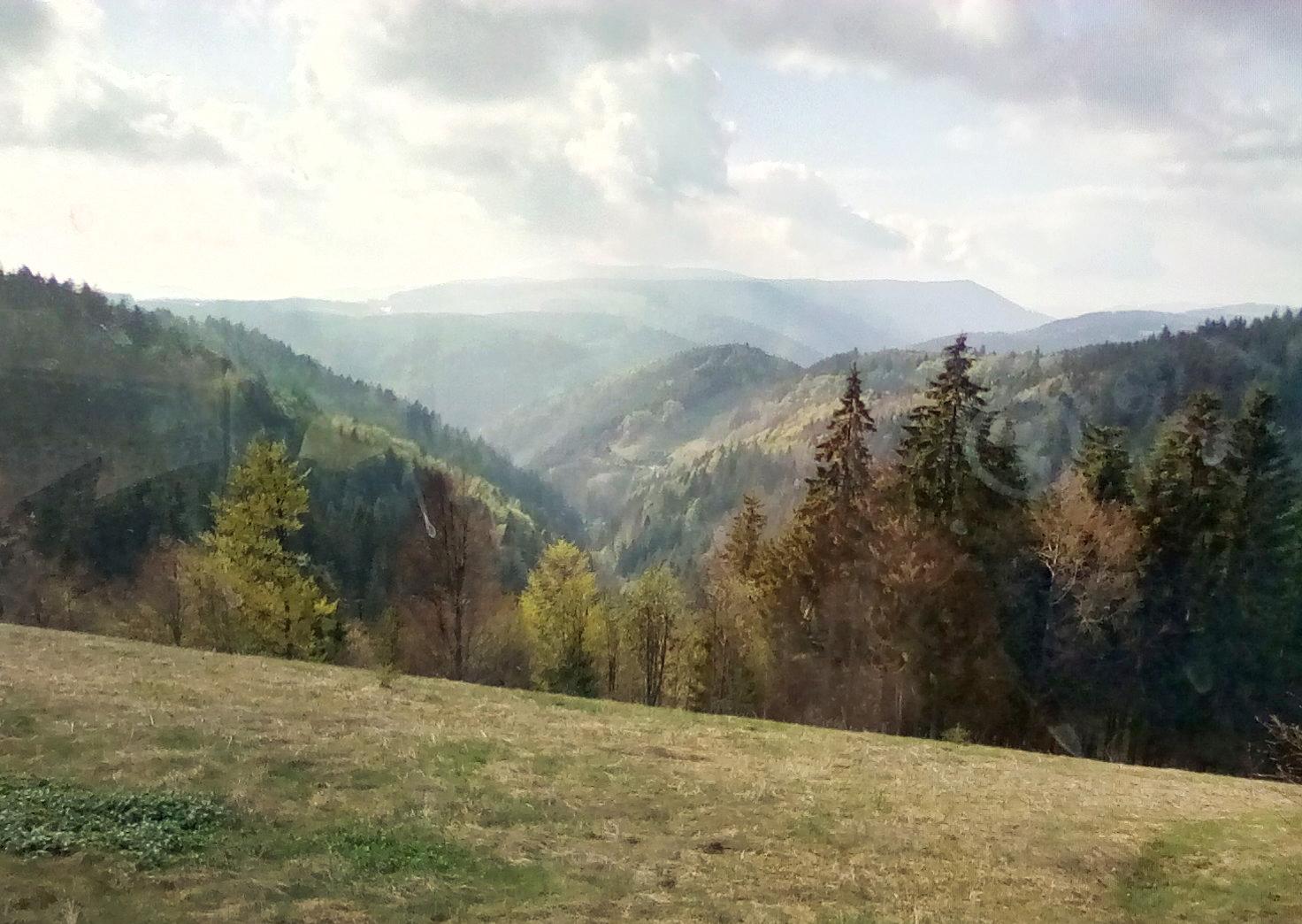 Schwarzwald Blick